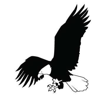 Bird (American Eagle)