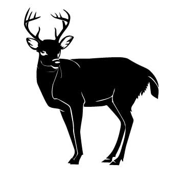 Deer (Version 1)