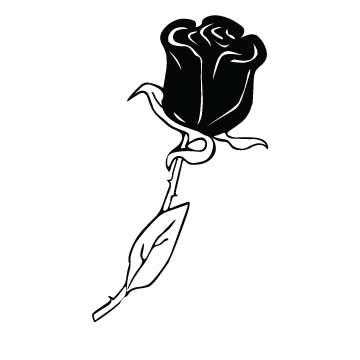 Rose (Elegant)