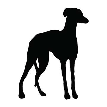 Dog (Greyhound)