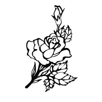 Rose (Spray)