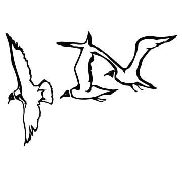 Bird (Seagulls)